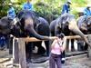 Elephants3_1
