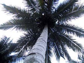 Palmpalmpalm